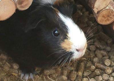 Bastian Schweinsteiger, Fee und Betty fühlen sich pudelwohl bei Andi