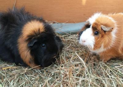 Bastian Schweinsteiger, Fee und Betty fühlen sich pudelwohl bei Andi1