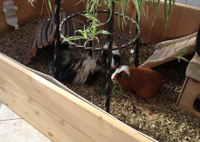 Bastian Schweinsteiger, Fee und Betty fühlen sich pudelwohl bei Andi2