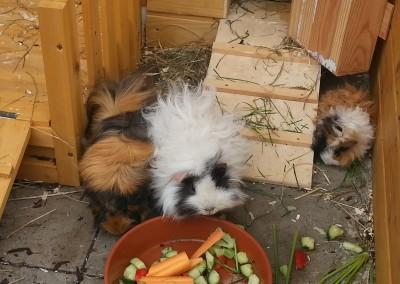 Betsy, Catweazle und Suleika (ehemalig Nanni) im Traumzuhause