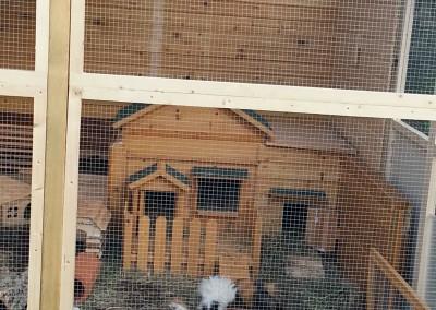 Betsy, Catweazle und Suleika (ehemalig Nanni) im Traumzuhause1