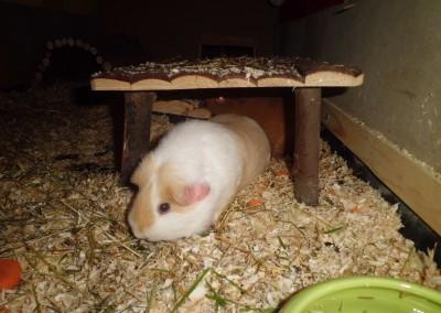 Carmi und Mina glücklich im neuen Zuhause bei Carina2