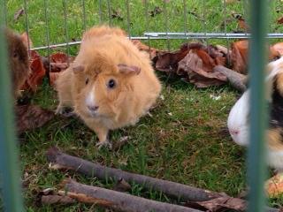 Die neuen Mitbewohner von Frau Hennrich1