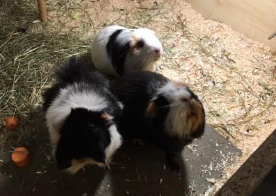 Fine und ihren beiden Freunde Emil und Ally - im neuen Zuhause bei Jennifer4