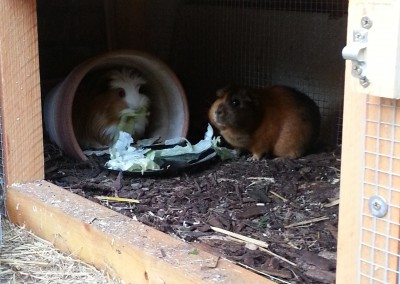 Frau Inga (jetzt Finchen) und Freddy (jetzt Arango) mit ihrer neuen Freundin Brownie bei Julia