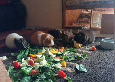 Lilo hat sich super bei Uli und ihrer Schweinebande eingelebt