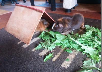 Lilo hat sich super bei Uli und ihrer Schweinebande eingelebt1