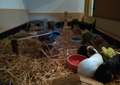 Meeris im neuen Heim bei Tobias