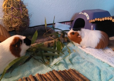 Melody (Melli) und Koko im neuen Heim