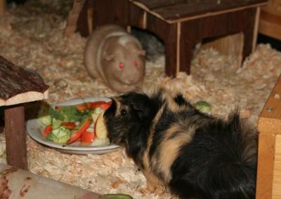 Pinsel ist der Boss bei seinen Damen Hera und Bella7
