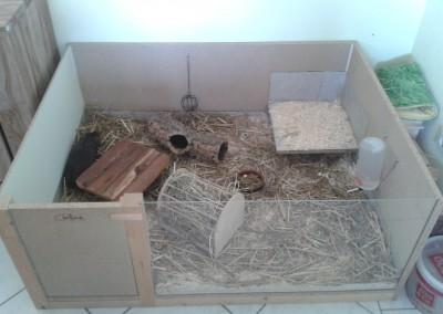 Snickers und Maggi wohnen jetzt bei Antje2