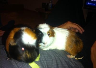 Sponky mit seinen neuen Freundinnen Lilli und Lisa1