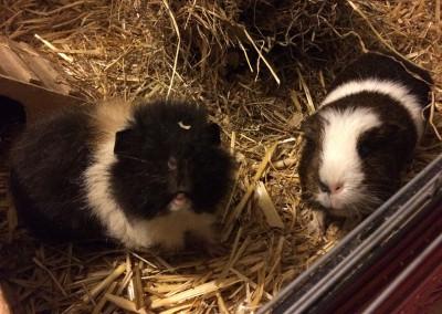 Tekla und Tommy bei Suzan1