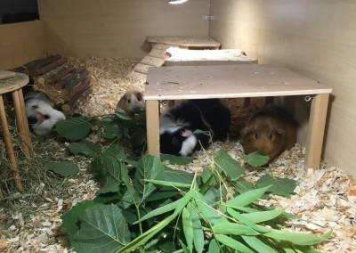 Tiny, Leila, Ally und Emil lassen es sich gut gehen bei Jenny2