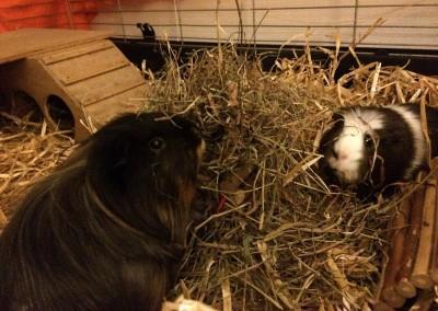 Tommy und Lotta lieben sich heiß und innig - danke an Suzan