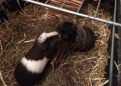 Tommy und Lotta lieben sich heiß und innig - danke an Suzan1
