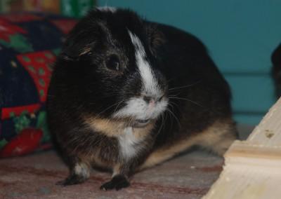 Traumschweinchen Fynn mit seinem Herzblatt Toffifee - danke Sandra