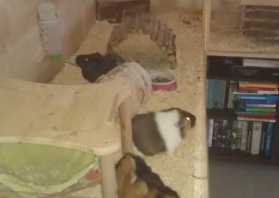 Wanda im neuen Zuhause bei Sabine2