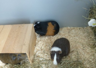 Willy, Luna, Arielle und Buddy sind glücklich bei Herrn Müller