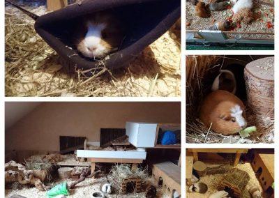 Hier kommen ein paar Bilder von Peanut und Stuart und ihrem neuen Zuhause.