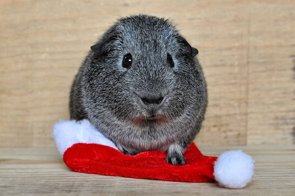 Frohe Schweihnachten