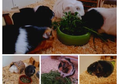 Schweinchen bei Daniela