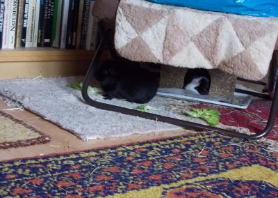 Bei Heike dürfen Lotte und Jill gemeinsam die Wohnung erkunden2