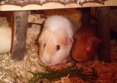 Carmi und Mina glücklich im neuen Zuhause bei Carina
