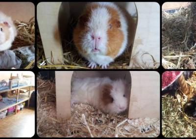 Felix, Maya, Fiona, Oscar, Phoebe und Lina - danke Sabine