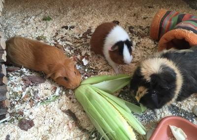 Grüße von Anja und den vier Stinkern Anton, Tiger, Baileys und klein Röschen1
