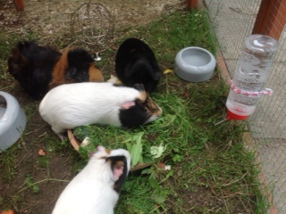 Grüße von Bulette (Franzi), Chi (Damon), Penny (Elli), Keks und Sunny - danke Familie Arenz2