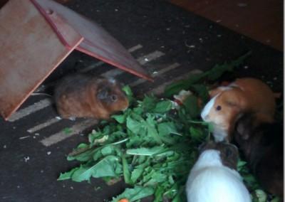 Lilo hat sich super bei Uli und ihrer Schweinebande eingelebt2