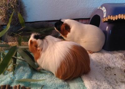 Melody (Melli) und Koko im neuen Heim1