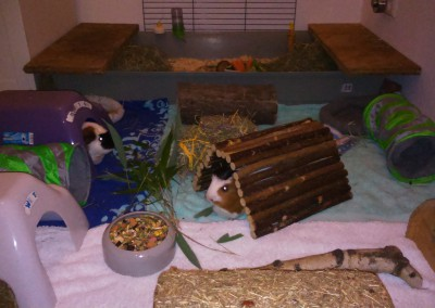 Melody (Melli) und Koko im neuen Heim2