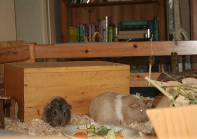 Pinsel ist der Boss bei seinen Damen Hera und Bella4