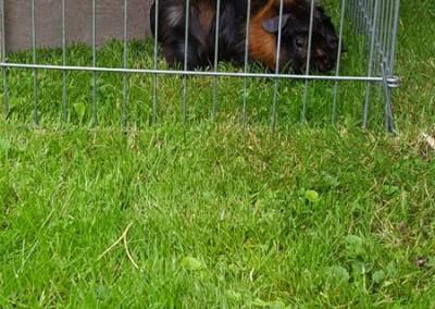Vanessas Schweinchen