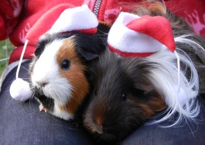 Weihnachten bei Familie Hellwichs mit den Wutzen Tequila und Mojito (Trude und Ted)