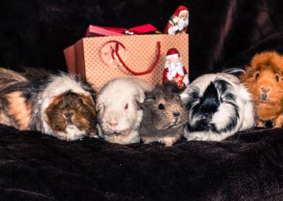 Weihnachtsgrüße von Nova und ihren Freunden