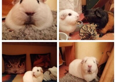 Gini bei Familie Weiß