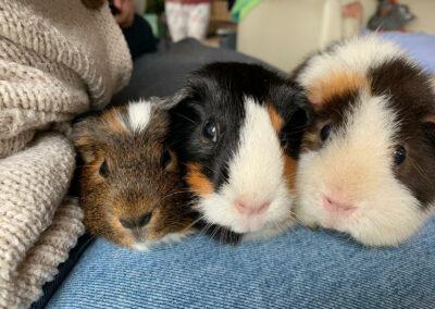 Alvin, Poppy und Coco