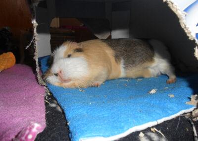 Polly, Shira, Trüffelchen und Pflümli schlafend
