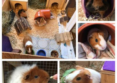 Sue, Minou und Leo